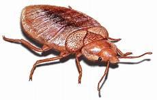 bed bug png images transparent free pngmart