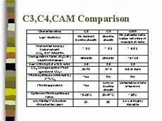 C3 C4 And Cam Plants Chart C3 C4 Cam Comparison