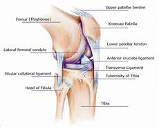 Knees Ligaments And Tendons Knee Symptoms Causes Treatments For Relief Or