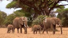 Malvorlage Afrikanischer Elefant Afrikanischer Elefant Loxodonta Africana Royalty Free