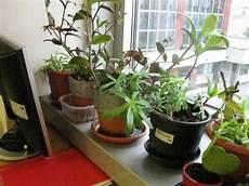 piante da davanzale ildorico 03 ottobre 2012 piante da ufficio