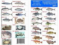 Florida Fish Id Chart Nc Saltwater Fish Size Amp Bag Limits Obx Journal Images