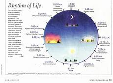 Circadian Rhythm Chart Listen To Your Body Clock Cancer And Your Health Grace