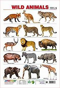 Animal Chart For Kindergarten Amazon Com Spectrum Pre School Kids Learning Poster