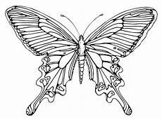 Malvorlagen Zum Ausdrucken Schmetterling Schmetterling Basteln Schmetterlinge Aus Filz Papier