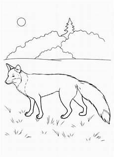 Kostenlose Ausmalbilder Zum Ausdrucken Fuchs Fuchs Bilder Zum Ausdrucken Malvorlagen Zum Ausmalen