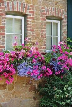fioriere per davanzale finestra fioriere primaverili alla finestra fiori da balcone