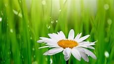 desktop green flower wallpaper wallpaper droplets green grass 4k flowers 3582