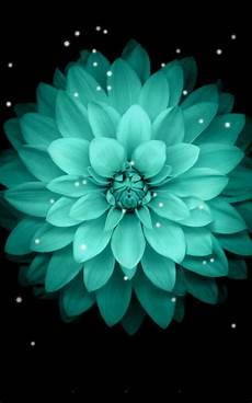 teal flower iphone wallpaper galaxy flowers live wallpaper android apps on play