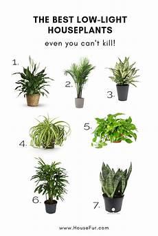 Best Plants For Low Light Terrarium The Best Low Light Houseplants You Can T Kill Plants