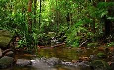 Rainforest Background Rainforest Wallpapers Wallpaper Cave
