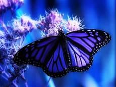 Mariposas Y Flores Im 225 Genes Bonitas Mariposa Azul Y Flores Rosas Im 225 Genes