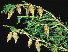 How To Treat Bagworms Messenger S Landscape Lawn And Irrigation