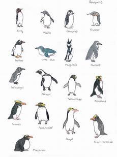 Types Of Penguins Chart Penguin Species By Bibliobibuli01 On Deviantart