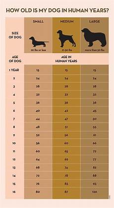 Puppy Food Chart By Age Your Dog S Age In Human Years A Conversion Chart Dogs