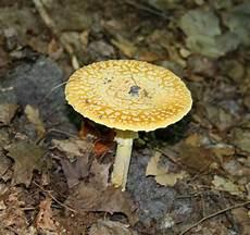 Birch Lodge Blog Fall Mushrooms At Birch Lodge Or The