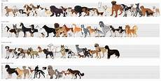 Dog Name Chart What Is Considered A Quot Large Dog Breed Quot Petlife