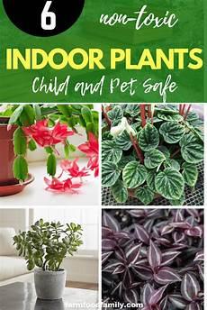 Low Light Pet Safe Indoor Plants Child And Pet Safe Houseplants 6 Non Toxic Indoor Plants
