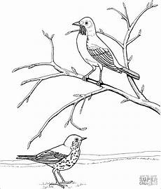 Robin Malvorlagen Free Robins Coloring Pages Coloringbay
