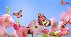 Mariposas Y Flores Mariposas Y Flores De Colores Fotos E Im 225 Genes En Fotoblog X