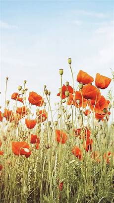 poppy flower wallpaper iphone beautiful poppies wallpaper for your iphone x from