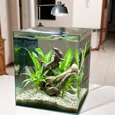 5 Gallon Tank Light Best 5 Gallon Fish Tank And Aquarium Kit For Sale Now