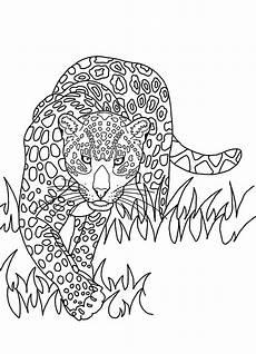 der regenwald shop postkarte zum ausmalen jaguar