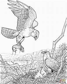 Malvorlagen Kinder Adler Adler Ausmalbilder Sch 246 N Ausmalbilder Adler Malvorlagen
