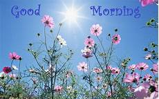 flower wallpaper with morning morning pictures wallpapers 2014 2013 shayari