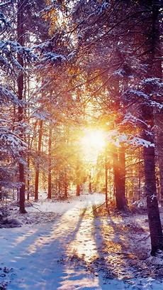Iphone Wallpaper Winter Lights by Winter Forest Landscape Iphone 6 Wallpaper
