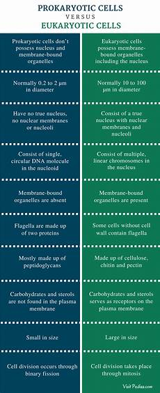 Difference Between Prokaryotic And Eukaryotic Difference Between Prokaryotic And Eukaryotic Cells