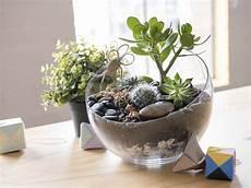 Best Plants For Low Light Terrarium How To Make A Self Sustaining Terrarium