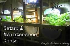 Aquaponics Setup Design Aquaponics System Design Setup And Maintenance Costs