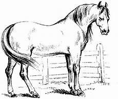 ausmalbilder pferde haflinger horses drawings
