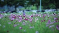 Flower Wallpaper Loading by Park Of Purple Flowers 4k Relaxing Screensaver