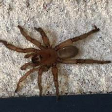 Oklahoma Spiders Identification Chart Spiders In Oklahoma Species Amp Pictures
