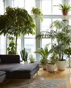 Low Light Apartment Plants 5 Hard To Kill Houseplants For Apartments With Low Light