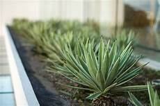 piante per da letto 6 piante ideali per la stanza da letto vivere pi 249 sani