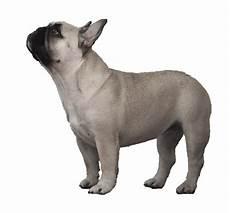 bulldog bulldog bulldog olde
