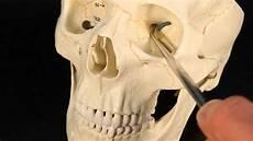 Sphenoid Bone Sphenoid Bone Youtube