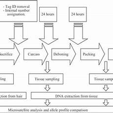 Pepper Processing Flow Chart Flow Chart Of A Meat Processing Plant And Details Of