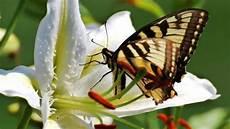 Mariposas Y Flores Flores Y Mariposas Youtube
