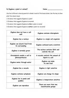 Euglena Classification Chart Euglena Plant Or Animal Teaching Resources