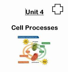 Cell Processes Unit In A Folder Cell Processes Photosynthesis