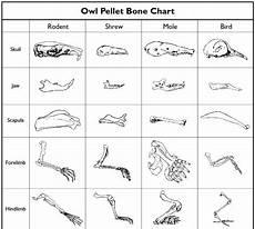 Owl Pellet Sorting Chart Owl Pellet Activity For Kids