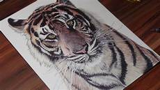 Picture Drawing Realistic Tiger Pen Drawing Demoose Art Youtube