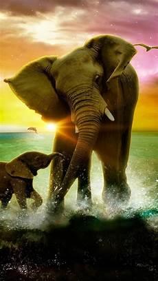 iphone x wallpaper elephant hd iphone wallpaper elephant wallpaper animals