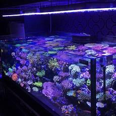 Best Aquarium Lights Orphek Atlantik V3 Plus Reef Aquarium Led Lighting Wifi