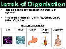 Levels Of Organization Levels Of Organization Powerpoint And Notes By The