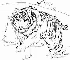 Malvorlagen Kostenlos Tiger Free Printable Tiger Coloring Pages For